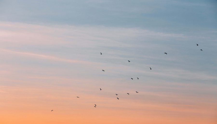 flock of bird at the blue and orange skies